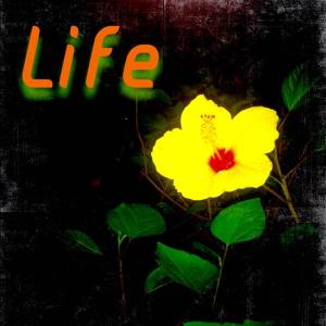 LIFE 81315